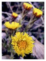 Ein paar Wildblumen ...
