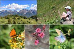 Ein Paradies für Sommervögel ...