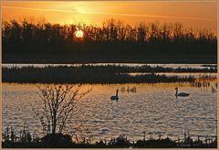 Ein Paradies für Wasservögel
