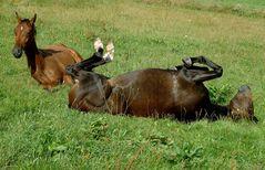 Ein Pferd hat es schwer ...