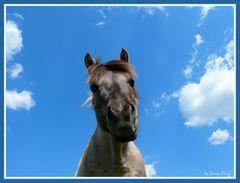 Ein Pferd im Himmel ;o)