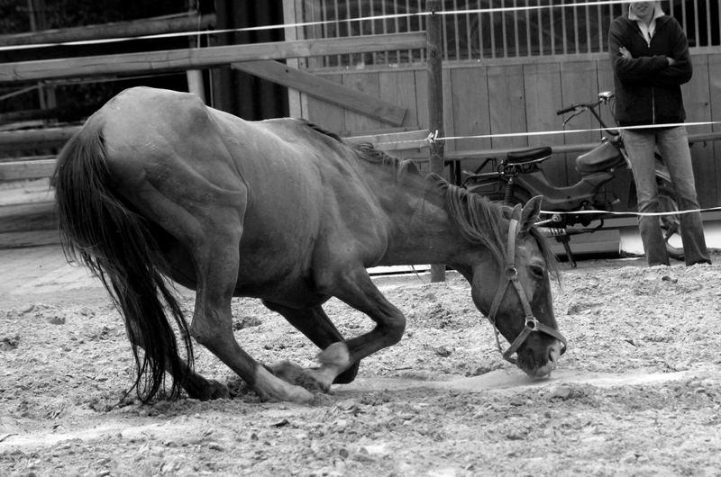 *Ein Pferd ist ein Lebewesen!!!*