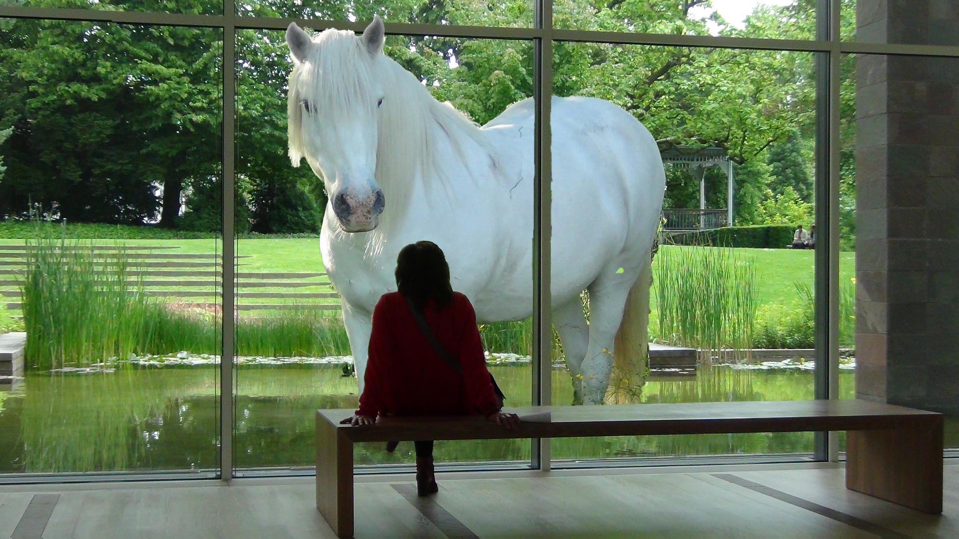 Ein Pferd schaut ins Museum