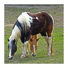 ein Pferd und ein halbes..