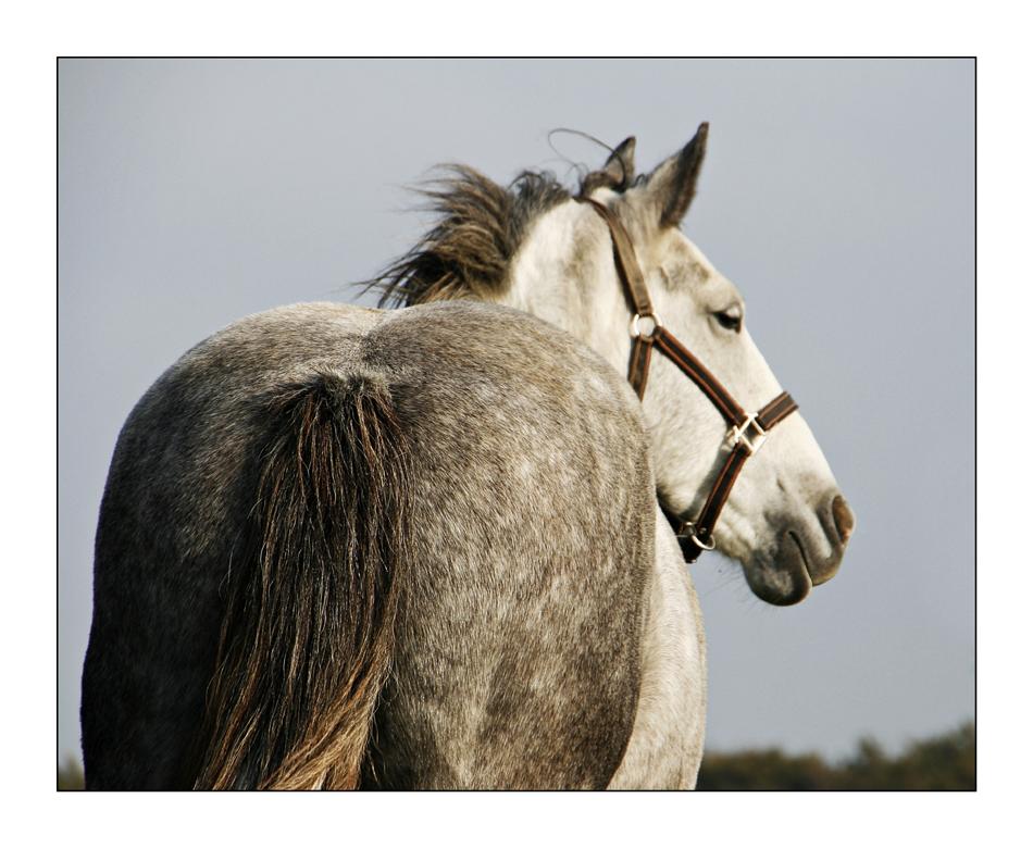 ein Pferdea . . .