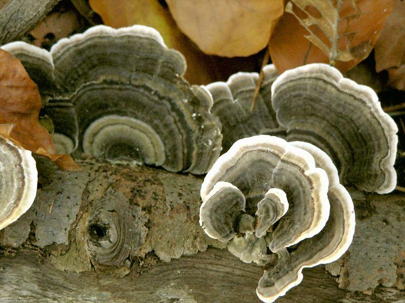 Ein Pilz, der wohl ein Schwamm ist