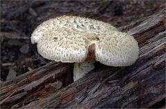 Ein Pilz ...