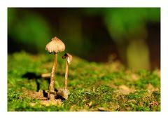 Ein Pilz und 'nen Kurzen