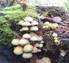 Ein Pilzbaum