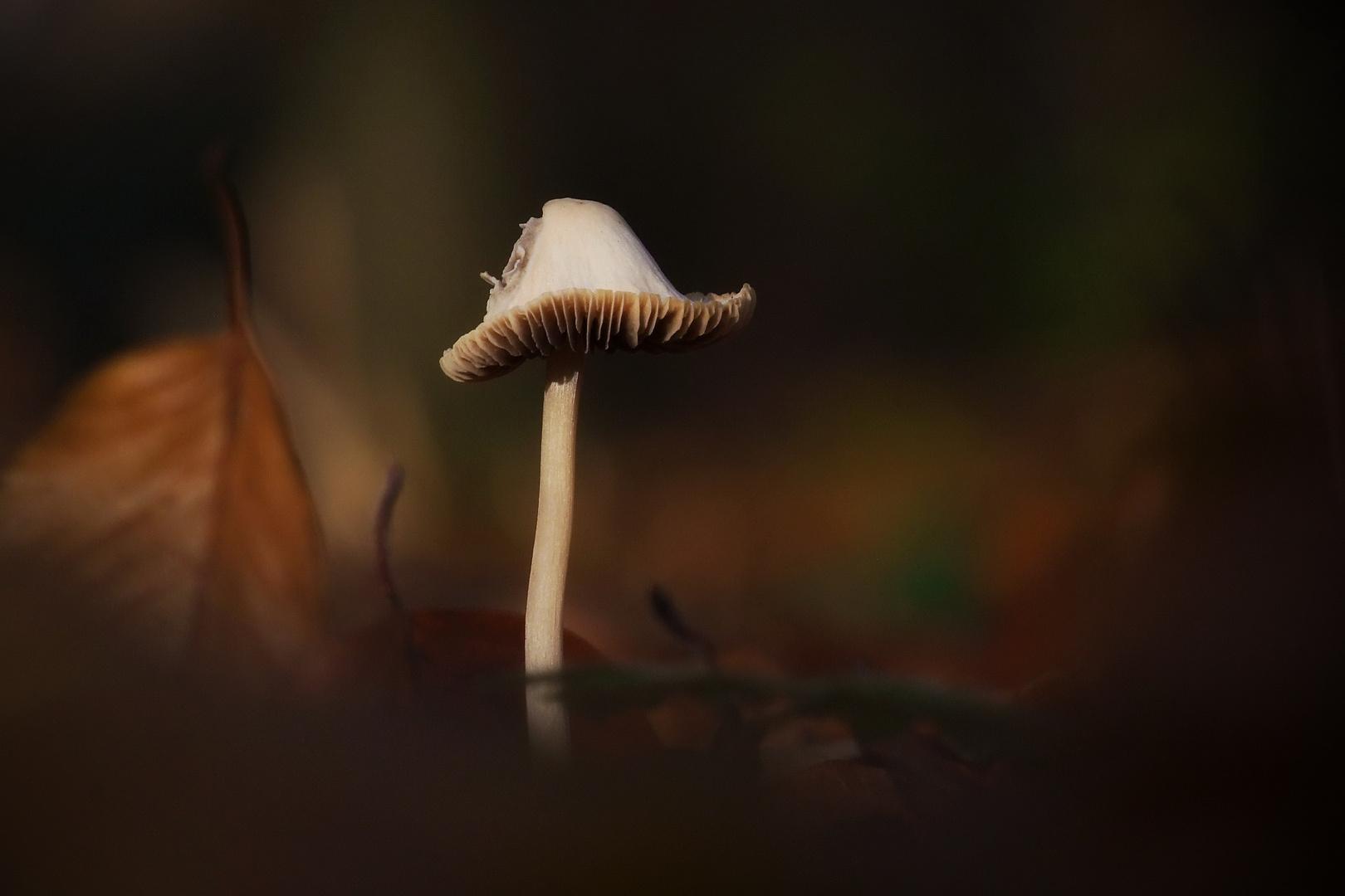 Ein Pilzlein . . .