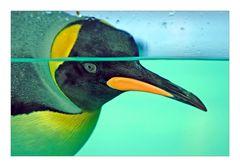 ein Pinguin ...