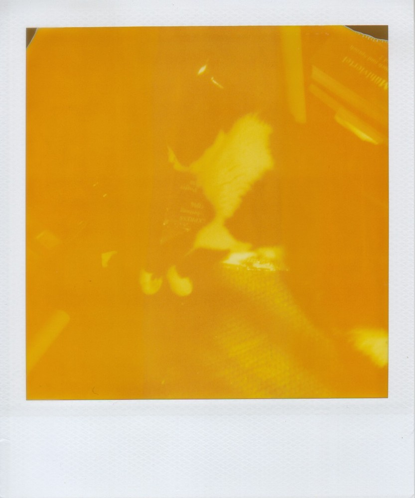ein Polaroidfoto braucht jeder in seiner Sammlung!