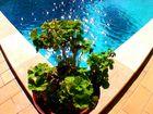 Ein Pool der Algarve
