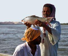 Ein Prachtexemplar, frisch gefangen aus dem Nil ...