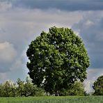 ein prachtvoller Baum  in der Ferne