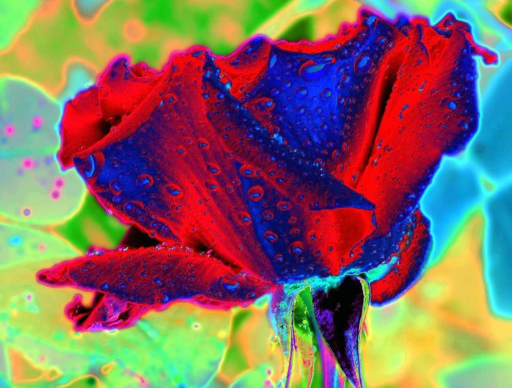ein psychedelische Rose