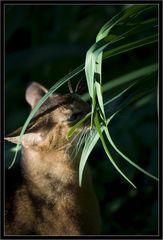 Ein Puma im Gras
