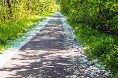 ein Radweg aber kein Schnee am Rand