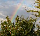 Ein Regenbogen in der Obstanlage...