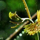 Ein Regentag im Frühling...