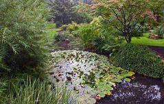 Ein Regentag im Japanischen Garten