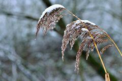 Ein Rest von Winter