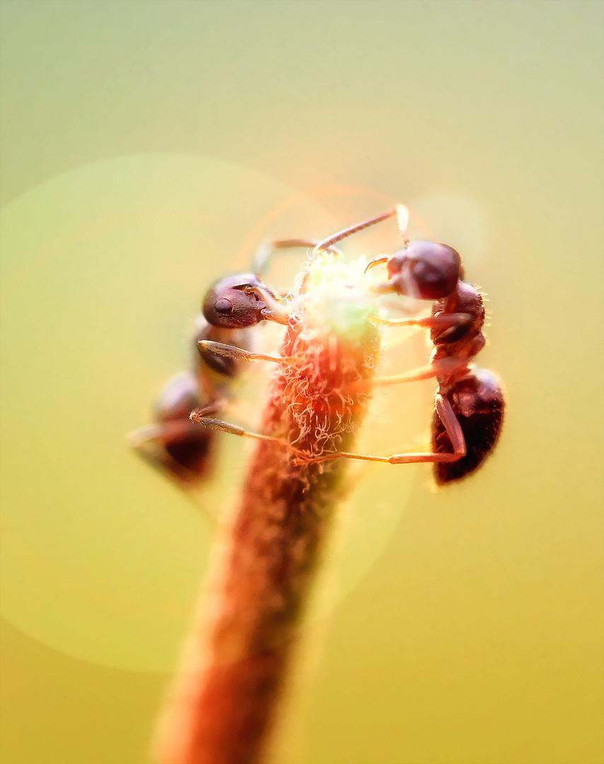 ein riesen zauberstab für ameisen ...