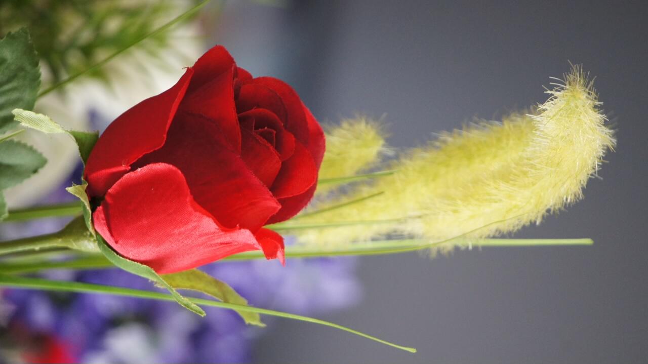 ein rose