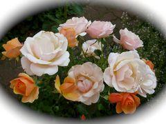 Ein Rosenbouquet