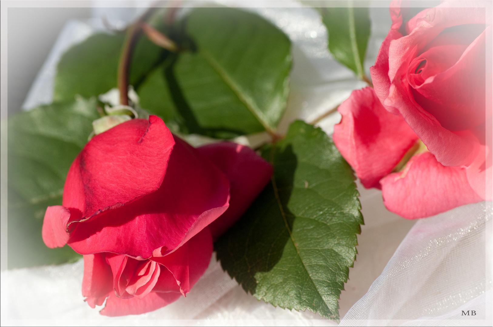 Ein Rosengruß.....