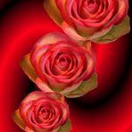 Ein Rosengruß für Irene aus Bamberg
