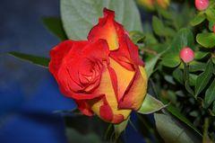ein Rosengruß....   zum Mittwoch