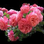 Ein Rosengruß zum Wochenende