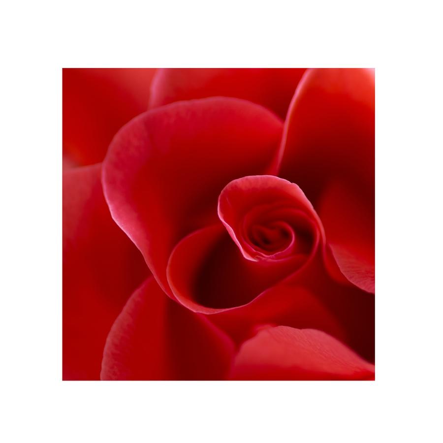Ein Rosenherz
