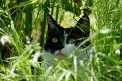 Ein Schattiges Plätzchen im Gras