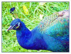 Ein schillernder Vogel