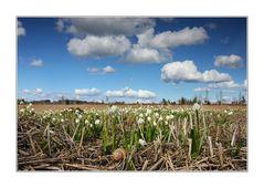 ~ Ein Schluck Frühling aus dem Märzenbecher ~