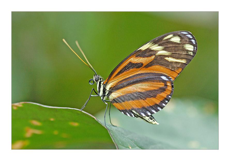 Ein Schmetterling ...