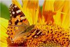 ...Ein Schmetterling....