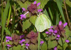 Ein Schmetterling ....