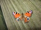 Ein Schmetterling im November 2008
