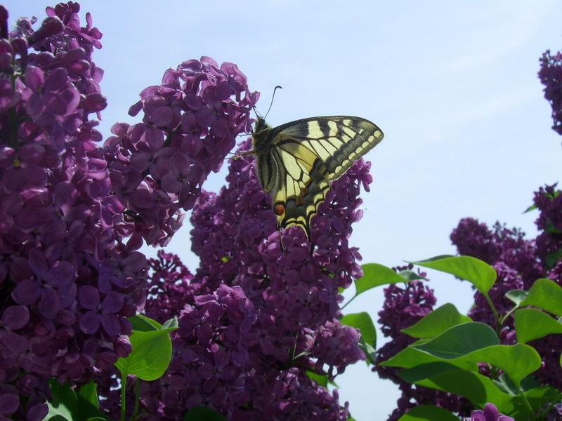 Ein Schmetterling kam zu Besuch