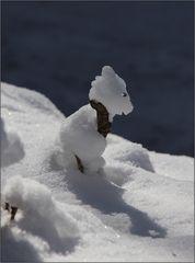 Ein Schneehündchen ...