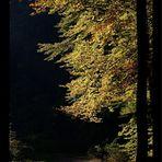 Ein schöner Herbstspaziergang