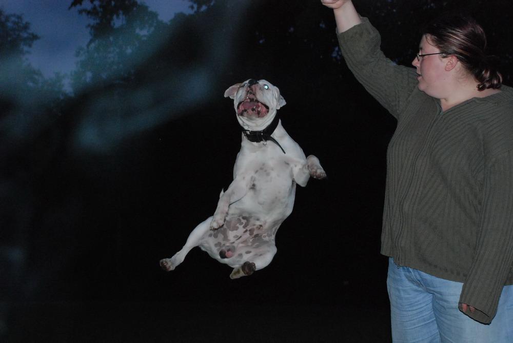 ein schöner jump