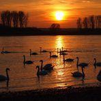 ein schöner Sonnenuntergang am Rhein im März