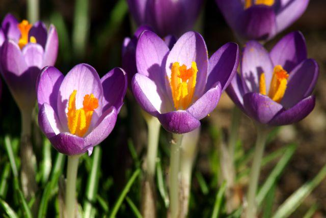 Ein schöner sonniger Februar Tag
