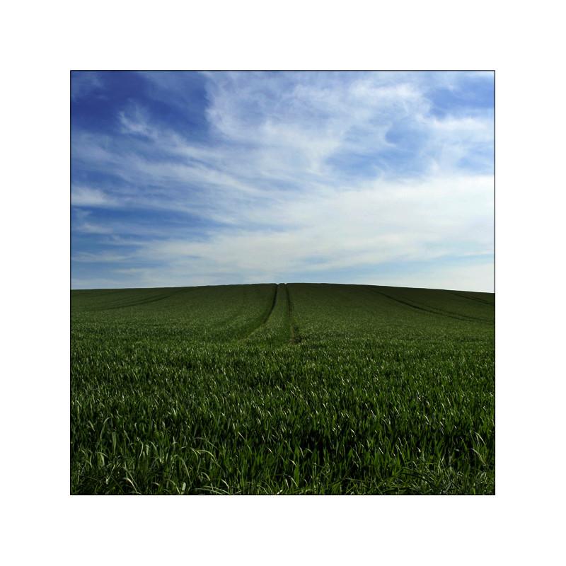 Ein schönes Feld