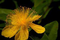 Ein schönes gelb