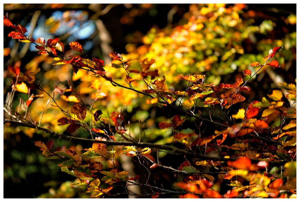 Ein schönes Herbstwochenende allen!!!